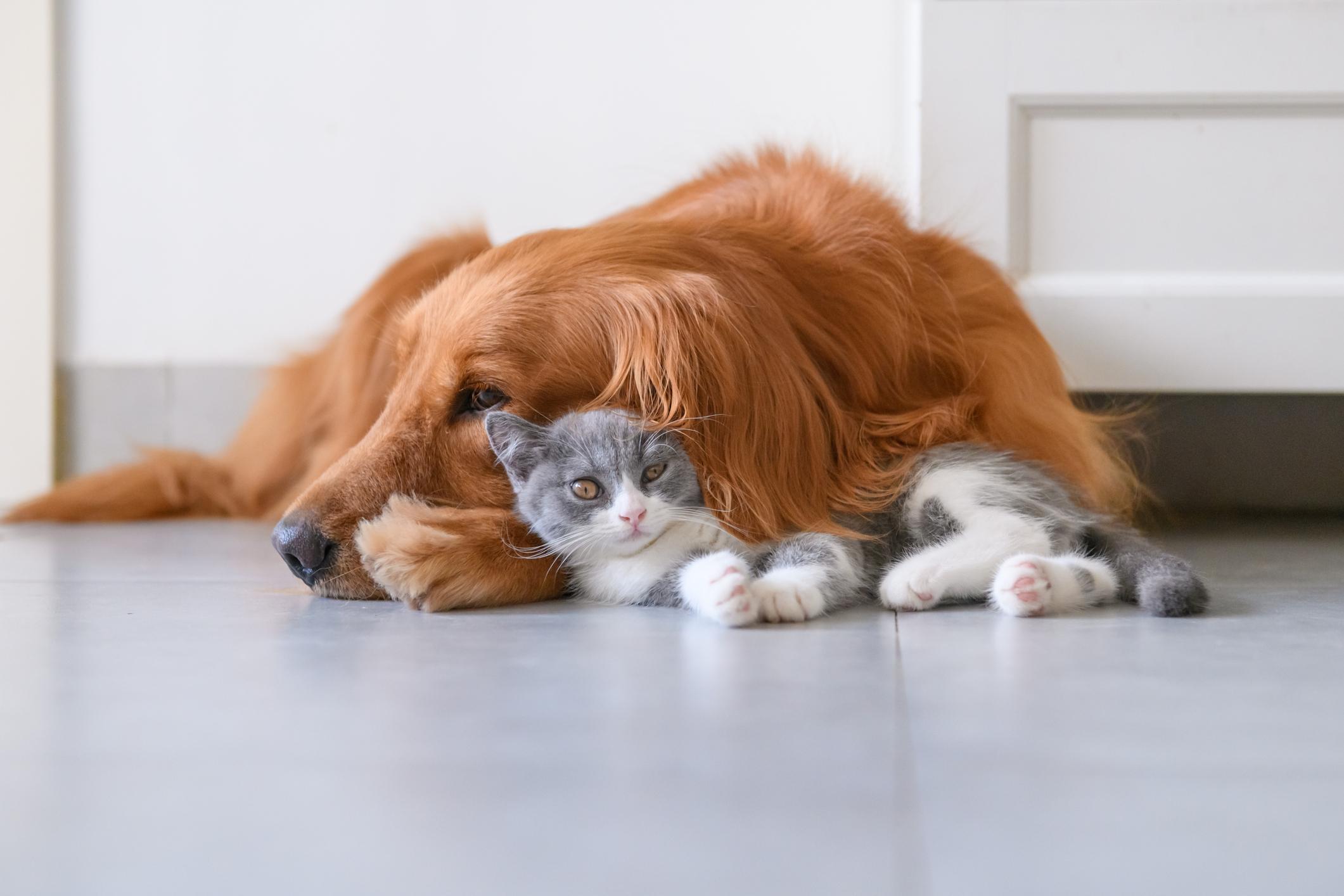 Корисні гаджети і програм, які стануть у пригоді власникам котів і собак