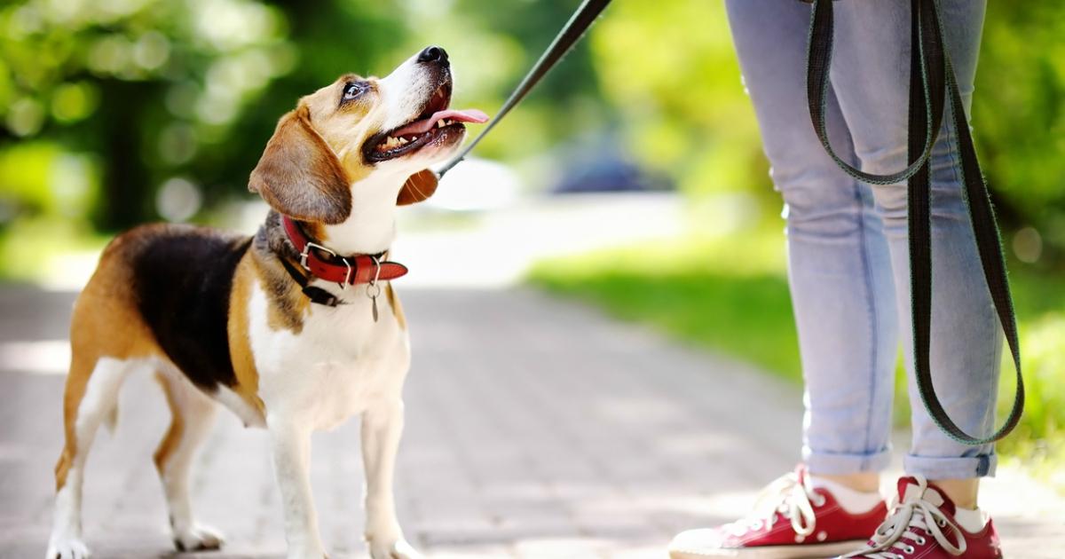 Як зробити собаці клізму в домашніх умовах