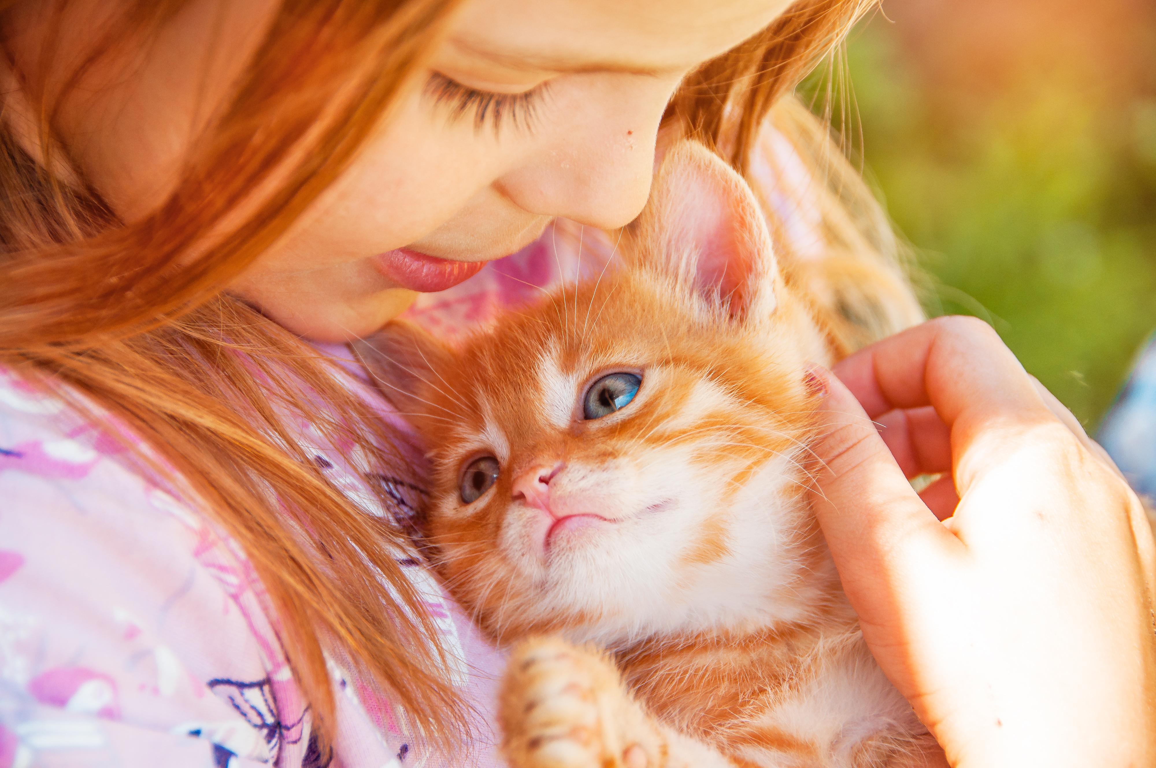 Як дізнатися, скільки кошеняті місяців, використовуючи нехитрі дані