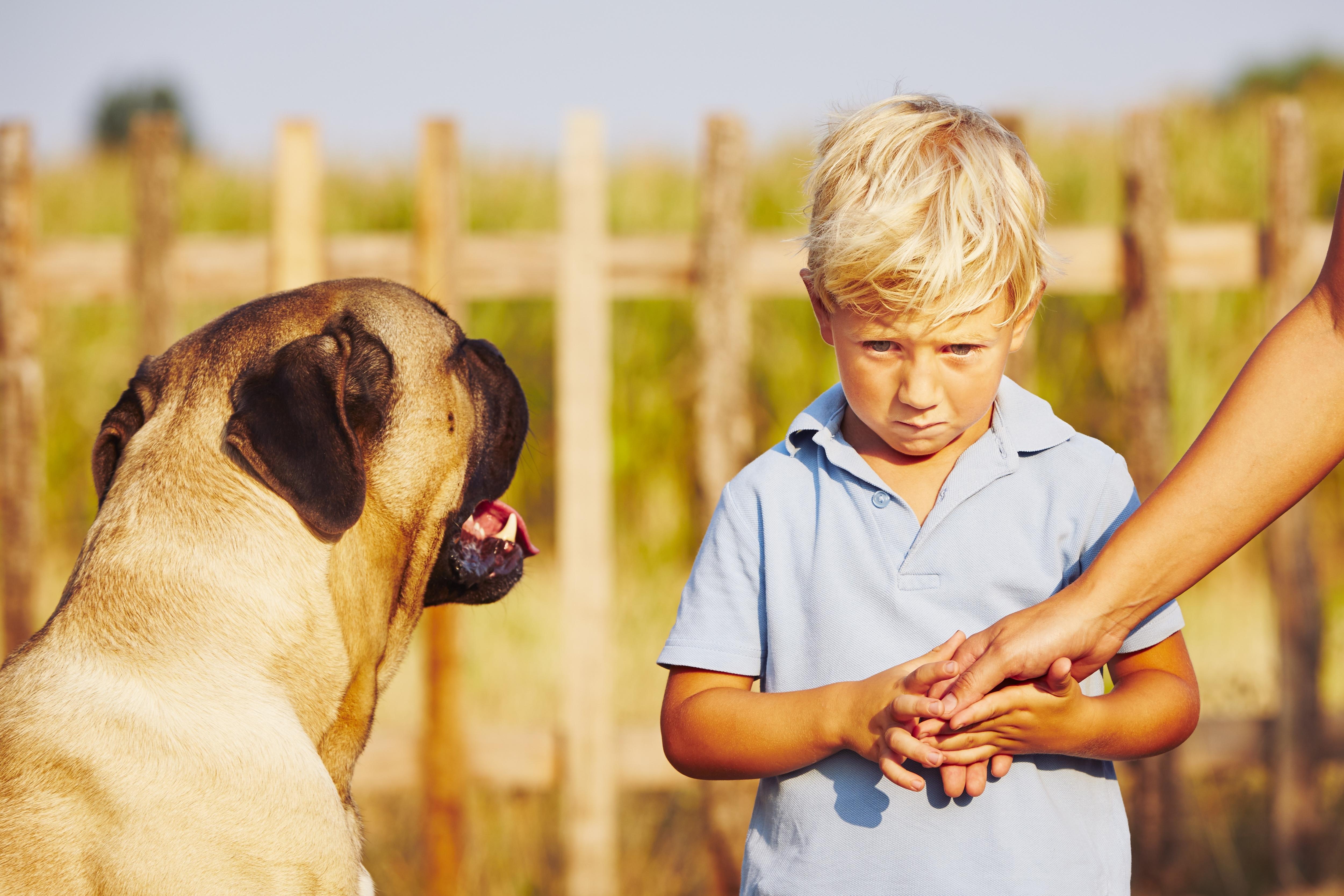 Засоби, що відлякують собак: топ-10 кращих