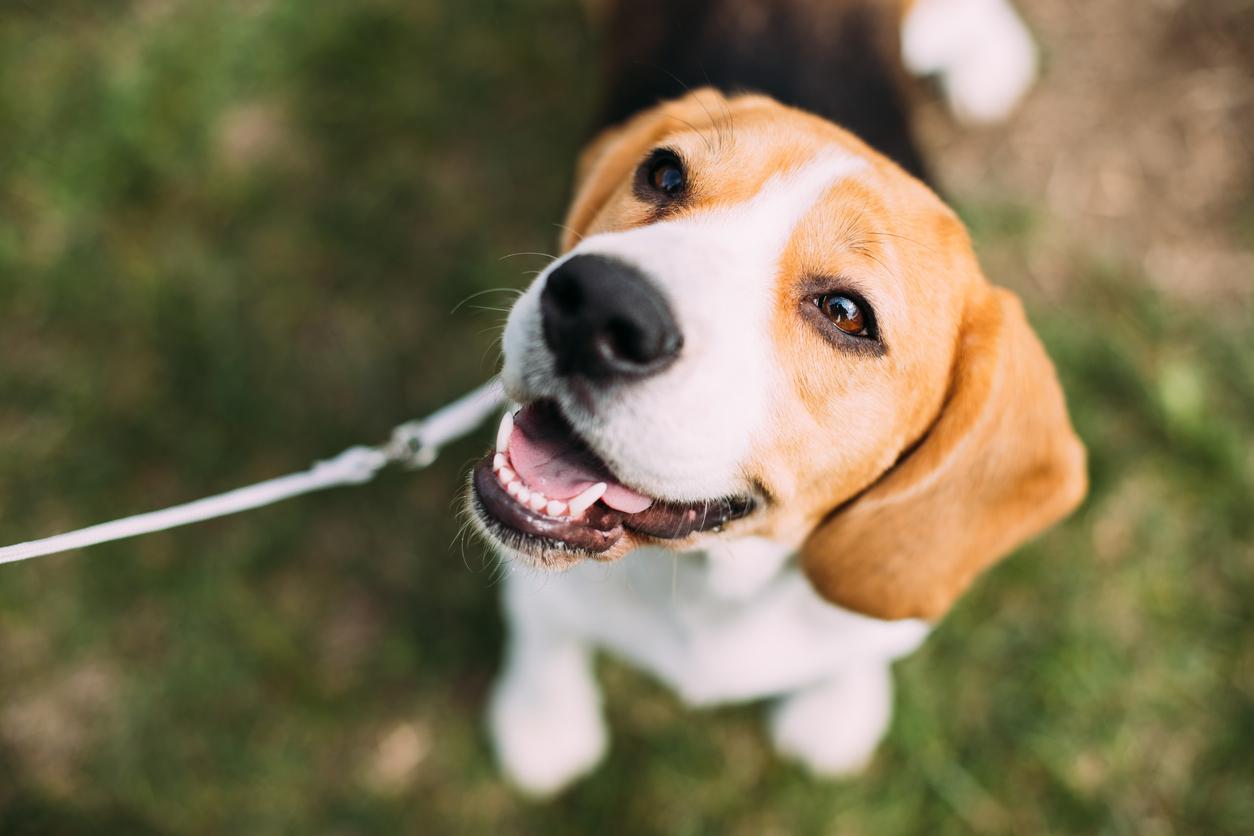 Собаки, які люблять дітей: 20 кращих порід для сім'ї
