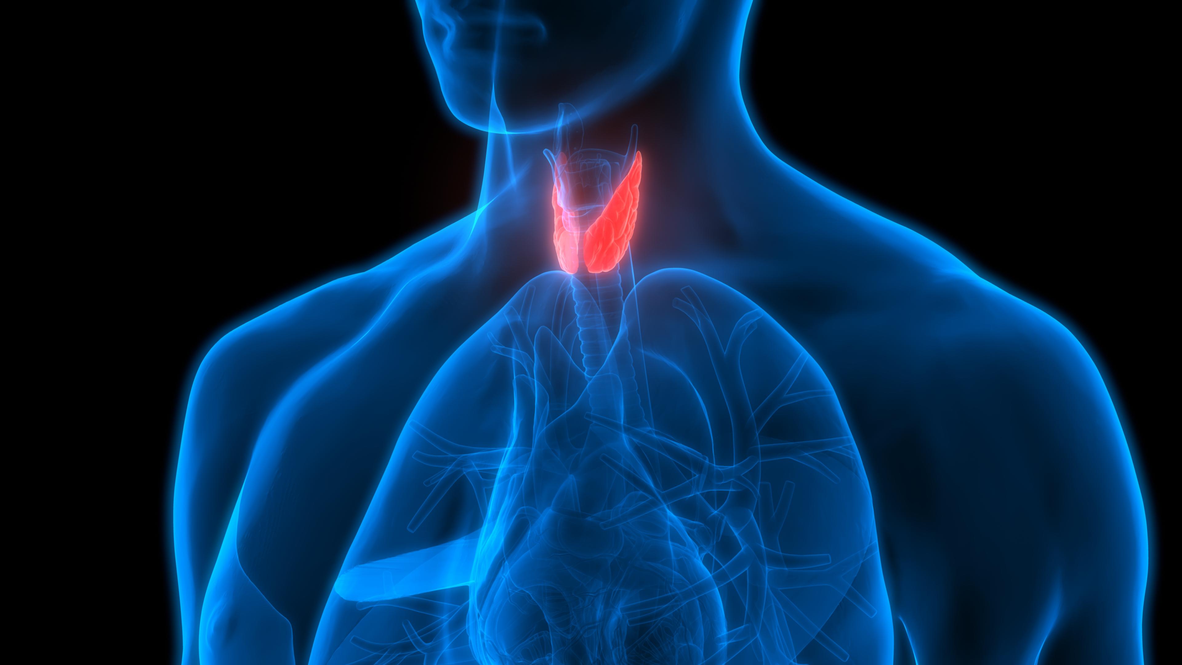 10 фактів про щитовидній залозі, які всім необхідно знати