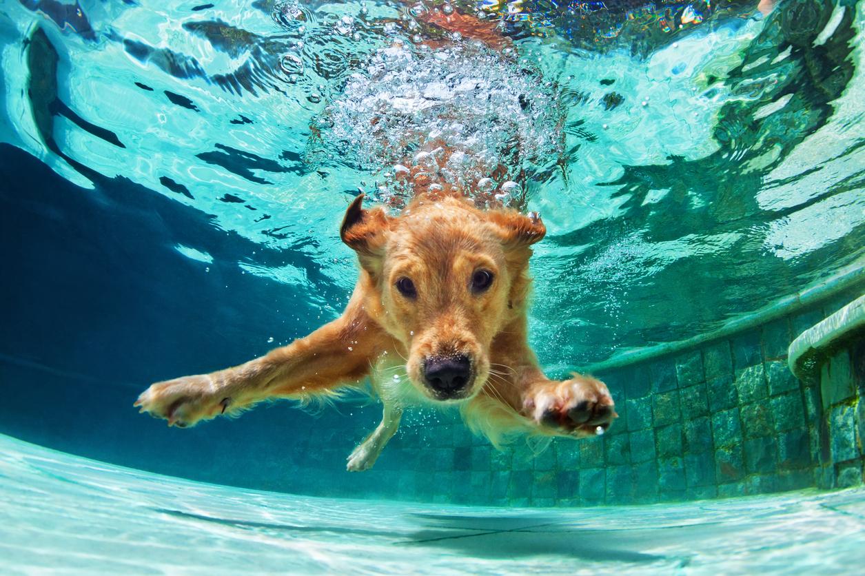 15 порід собак, які відмінно впишуться в активний спосіб життя