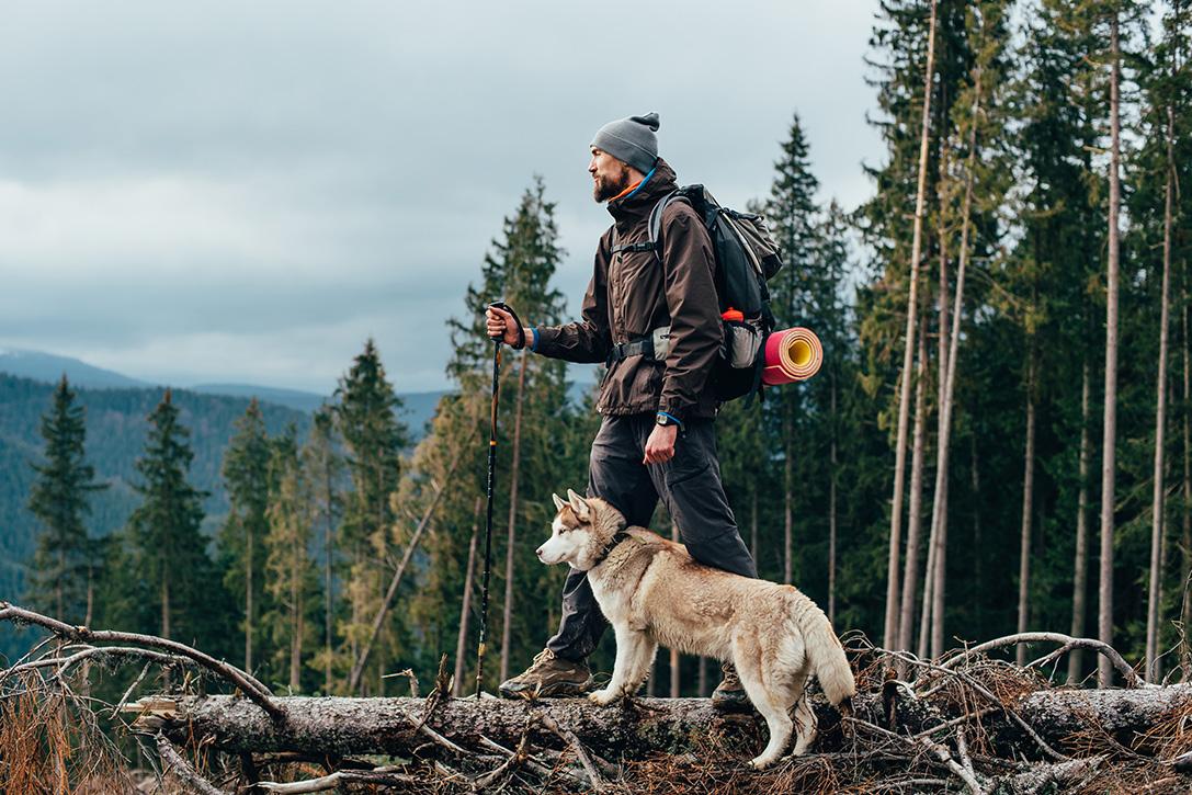 9 порад для походу з собакою
