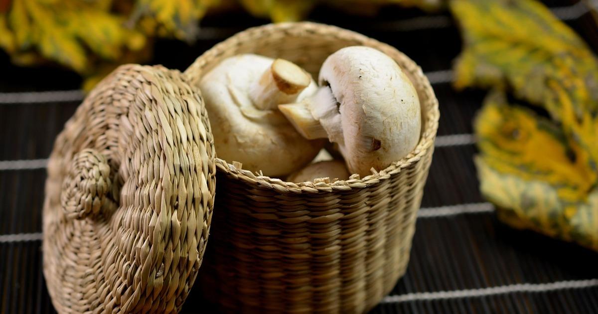 Що приготувати із грибів: 4 сезонних рецептів