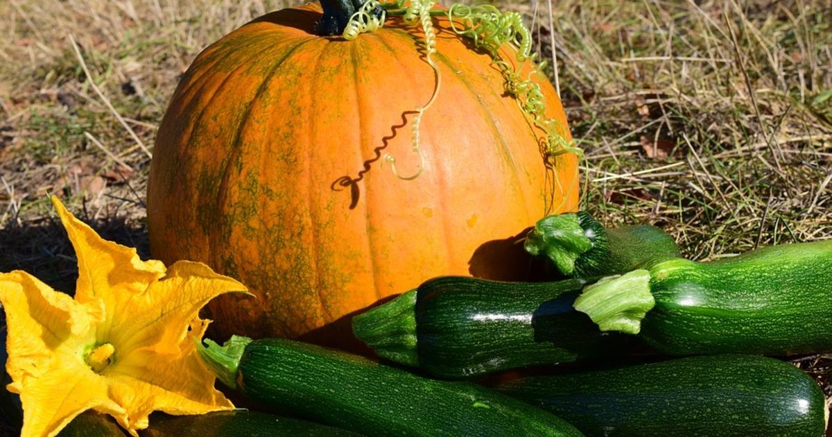 Що приготувати: 3 простих рецепти з цукіні, які варто встигнути приготувати восени