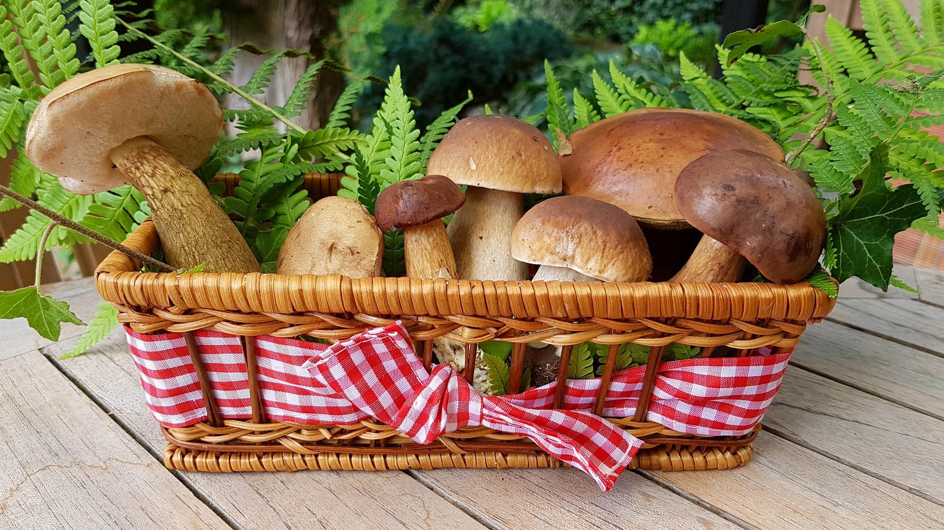 5 відмінних рецептів на основі грибів